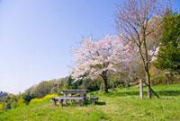 春の公園 10134001773| 写真素材・ストックフォト・画像・イラスト素材|アマナイメージズ
