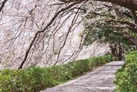 桜と青空 10134001781| 写真素材・ストックフォト・画像・イラスト素材|アマナイメージズ