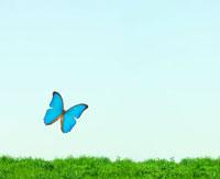 蝶イメージ