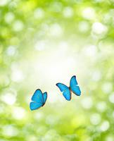 新緑と蝶 10137005249| 写真素材・ストックフォト・画像・イラスト素材|アマナイメージズ