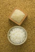 籾と米とご飯 10137008068| 写真素材・ストックフォト・画像・イラスト素材|アマナイメージズ