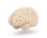 脳 10137008145| 写真素材・ストックフォト・画像・イラスト素材|アマナイメージズ