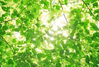 新緑と光 10138000464| 写真素材・ストックフォト・画像・イラスト素材|アマナイメージズ