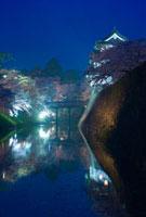桜と弘前城のライトアップ