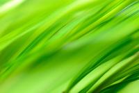 水に映る緑葉のアウトフォーカスによる緑の背景イメージ