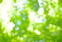 新緑と木漏れ日のアウトフォーカスによる背景イメージ 10140000124| 写真素材・ストックフォト・画像・イラスト素材|アマナイメージズ