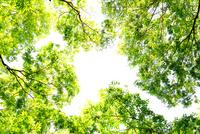 新緑の木々 10140000136| 写真素材・ストックフォト・画像・イラスト素材|アマナイメージズ