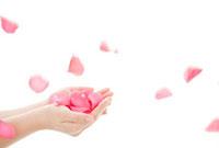 薔薇の花びらを受け止めるイメージ