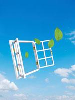 青空バックに白い窓枠から緑の葉が舞い出る
