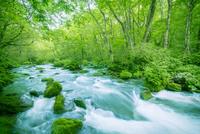緑の森と奥入瀬渓流