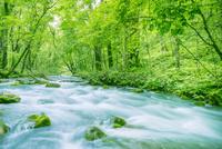 緑の森と奥入瀬渓流 10143005714  写真素材・ストックフォト・画像・イラスト素材 アマナイメージズ