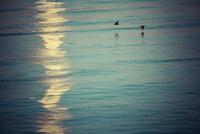 ウミウと水面の反射