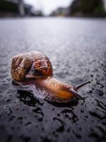 濡れた路面にいるカタツムリのアップ