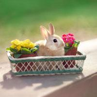 カゴの中のウサギ