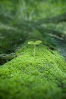 原生林に生える若葉 10144000737  写真素材・ストックフォト・画像・イラスト素材 アマナイメージズ