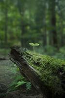 原生林に生える若葉 10144000739  写真素材・ストックフォト・画像・イラスト素材 アマナイメージズ
