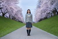 桜並木の中に立つ女子高生 10144000797| 写真素材・ストックフォト・画像・イラスト素材|アマナイメージズ