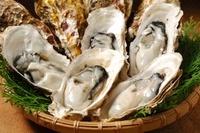 生牡蠣 10145000540| 写真素材・ストックフォト・画像・イラスト素材|アマナイメージズ