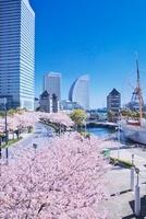 横浜みなとみらい21と桜 10146001828| 写真素材・ストックフォト・画像・イラスト素材|アマナイメージズ