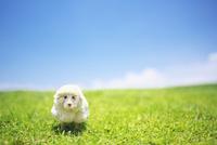 芝生に置いた羊のクラフト