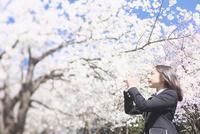 桜の下で写真を撮る女子中学生 10146003721| 写真素材・ストックフォト・画像・イラスト素材|アマナイメージズ