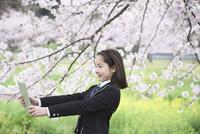 桜並木の下で写真を撮る女子中学生