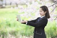 桜並木の下で写真を撮る女子中学生 10146003729| 写真素材・ストックフォト・画像・イラスト素材|アマナイメージズ
