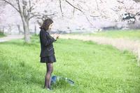 桜並木の下でタブレットを操作する女子中学生