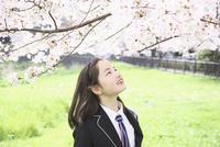 桜の花を見る女子中学生