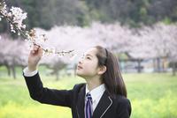 桜の花の香りを嗅ぐ女子中学生 10146003738| 写真素材・ストックフォト・画像・イラスト素材|アマナイメージズ