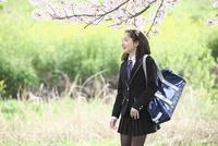 桜並木の下を歩く女子中学生 10146003770| 写真素材・ストックフォト・画像・イラスト素材|アマナイメージズ