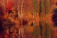 道院高原の紅葉