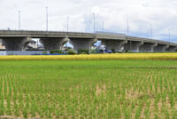 田園と跨線橋