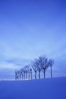 ハサ木の雪景色