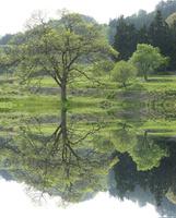湖畔の映り込んだ新緑