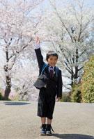 桜と手を挙げる小学一年生の男の子 10154000077| 写真素材・ストックフォト・画像・イラスト素材|アマナイメージズ
