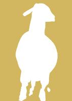 金色地白い羊
