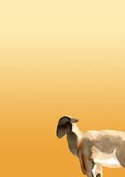 金色グラデーション地左向き羊