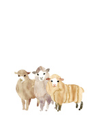 無地羊の三兄弟 10155000862| 写真素材・ストックフォト・画像・イラスト素材|アマナイメージズ