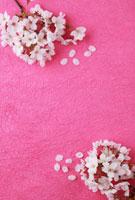 ピンクの和紙に桜の花びら