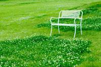 草原の白いベンチ