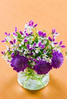 スカビオサとビオラの花 10158001512| 写真素材・ストックフォト・画像・イラスト素材|アマナイメージズ