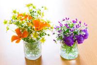 リムナンテスとエスコルチアとスカビオサとビオラの花 10158001514| 写真素材・ストックフォト・画像・イラスト素材|アマナイメージズ
