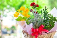 母の日のカーネーションとナスタチュームの花かご