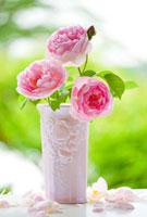 花瓶のピンクのバラの花