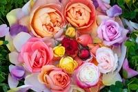 器に入ったバラと花びらとクローバー