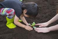 野菜の苗を植える母子