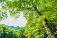 奥日光の#8;外山の新緑の樹木