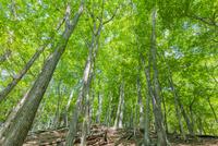 奥日光の新緑の森