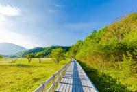 小田代原の湿原と木道
